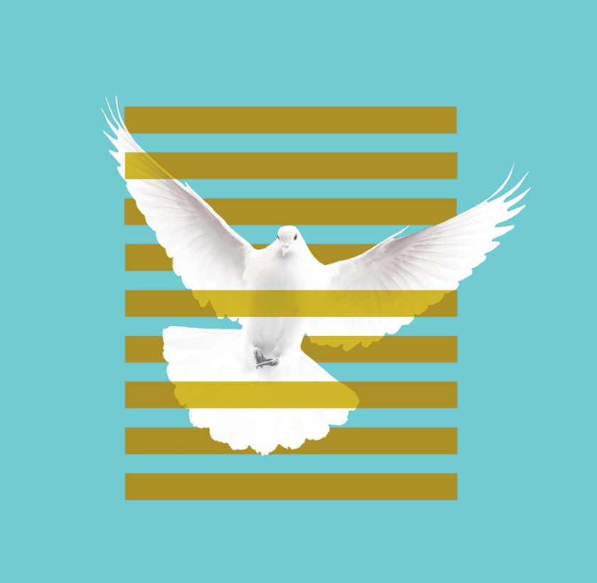 flying dove with typography